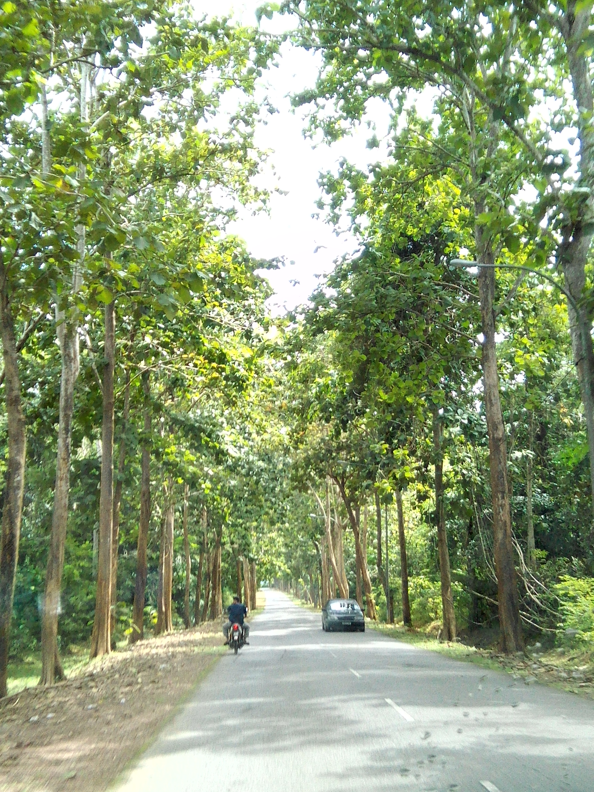 On our way to the forest.  The green trees are so refreshing.